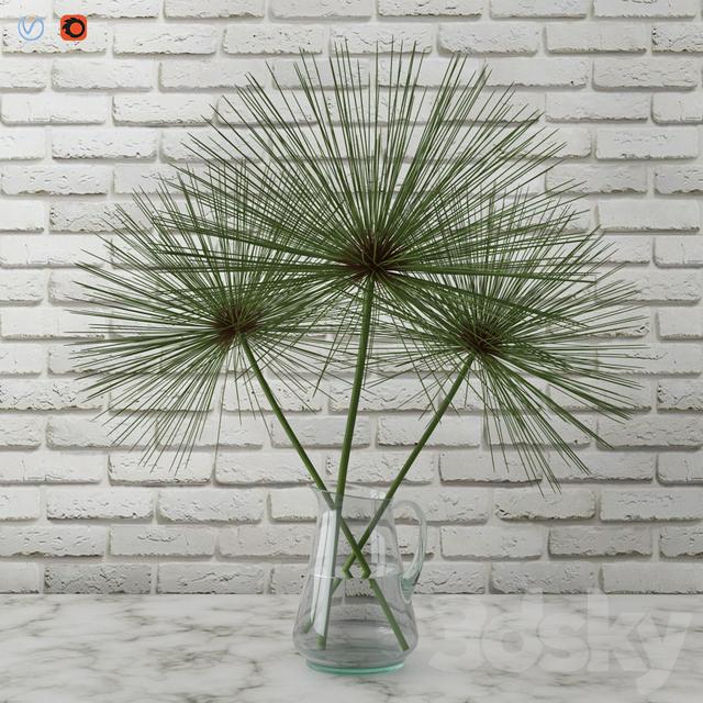 3d models plant cyperus papyrus papyrus in a vase. Black Bedroom Furniture Sets. Home Design Ideas