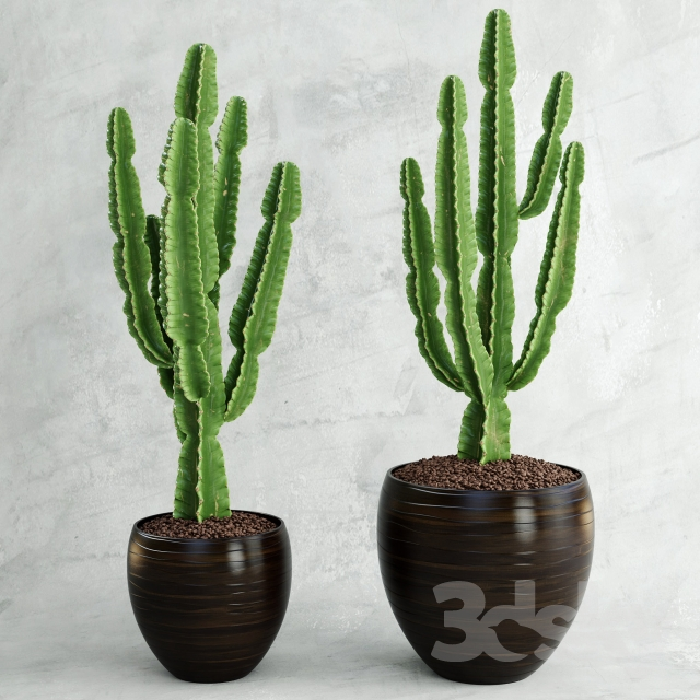3d models plant cactus euphorbia ingens. Black Bedroom Furniture Sets. Home Design Ideas