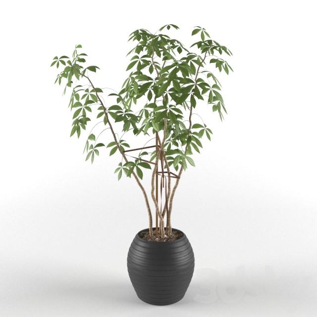 3d Models Plant Indoor Ornamental Plant