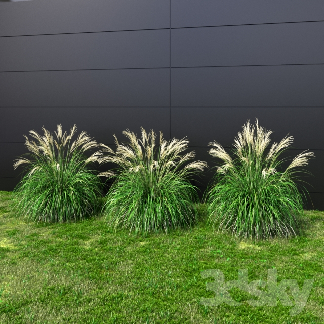 3d models plant ornamental grass miscanthus small