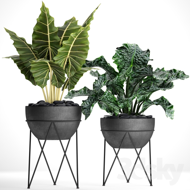 Collection of plants in pots 26