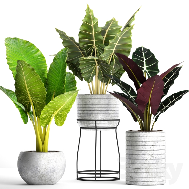 Collection of plants in pots 33