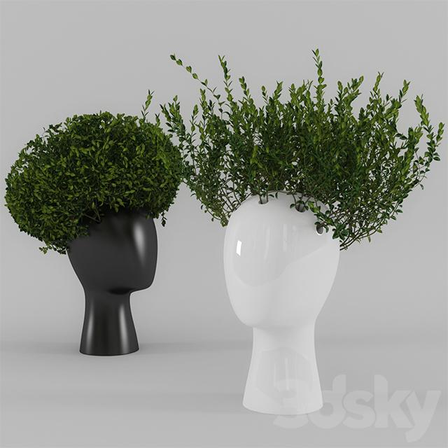 3d Models Bouquet Wig Vase With Boxwood Part 1