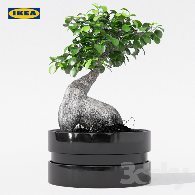 3d models plant ficus microcarpa ginseng with pot ikea. Black Bedroom Furniture Sets. Home Design Ideas