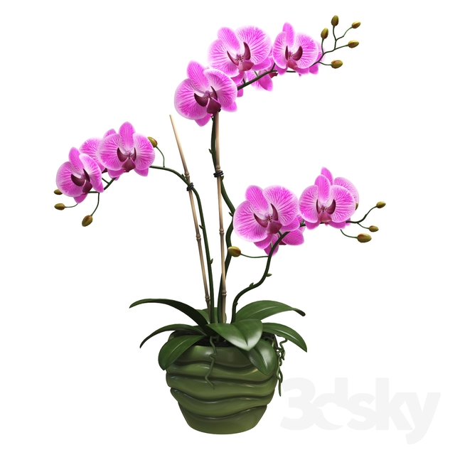 Flowers Orchid 1