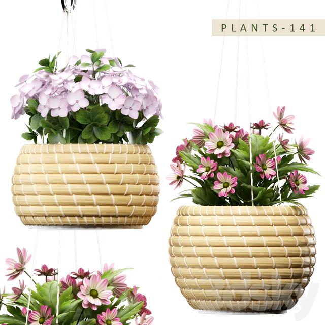 PLANTS 141