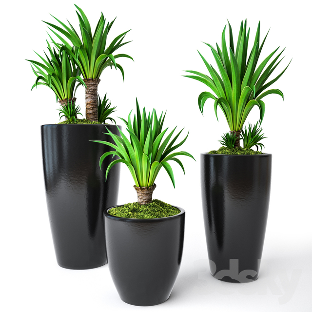 3d models: Indoor - Palm Yucca