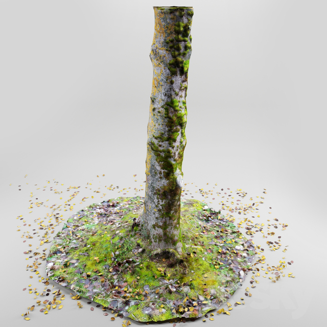 3d models: Tree - Tree trunk