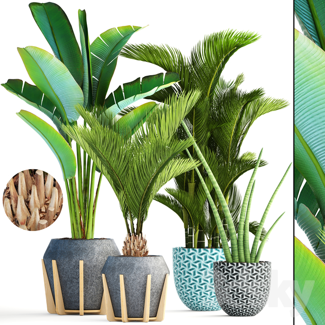 Collection of plants 148.Tropical plant