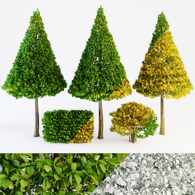 Trees green & fall