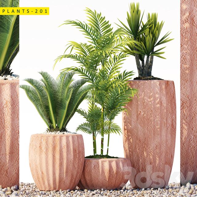 Plants 201