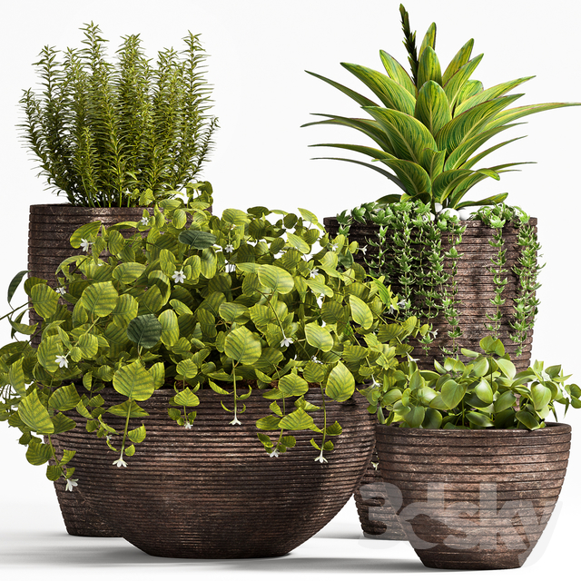 PLANT SET -101