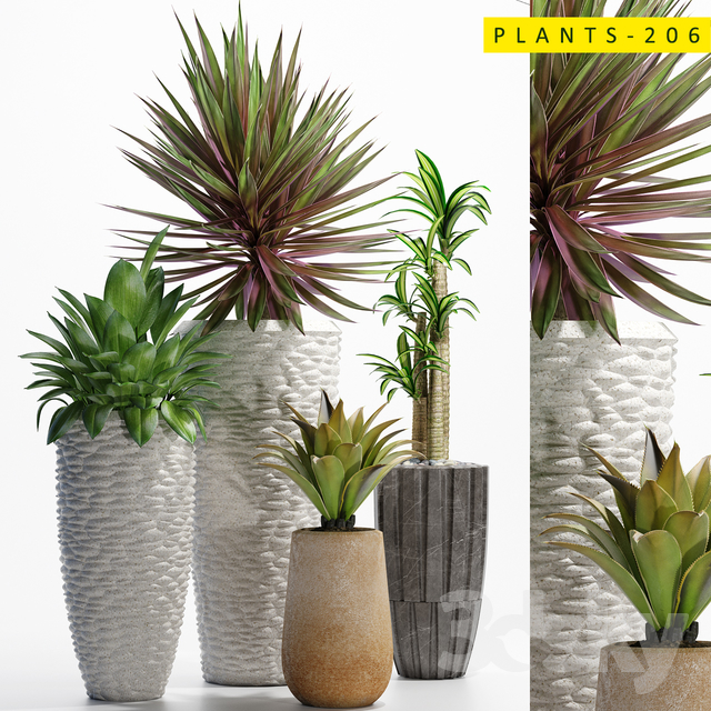 plants_206