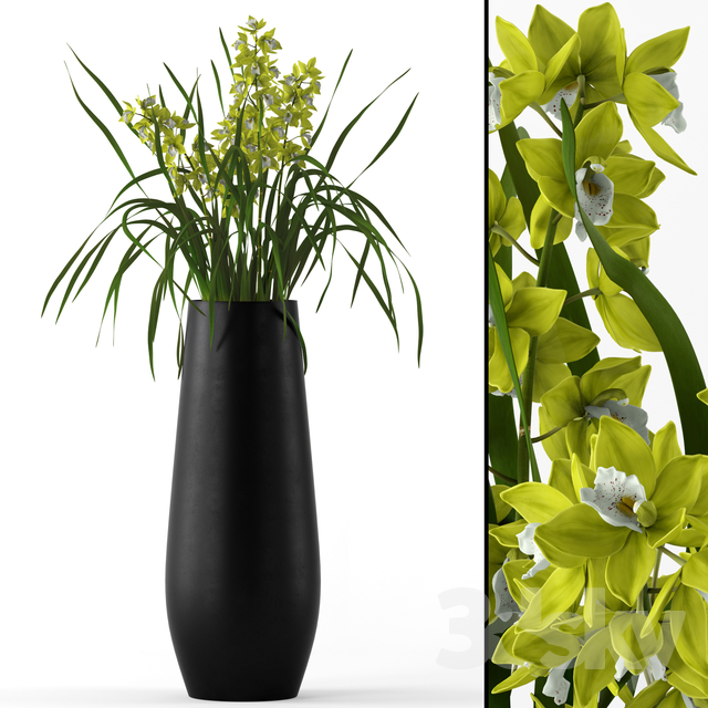 Cymbidium in floor vase