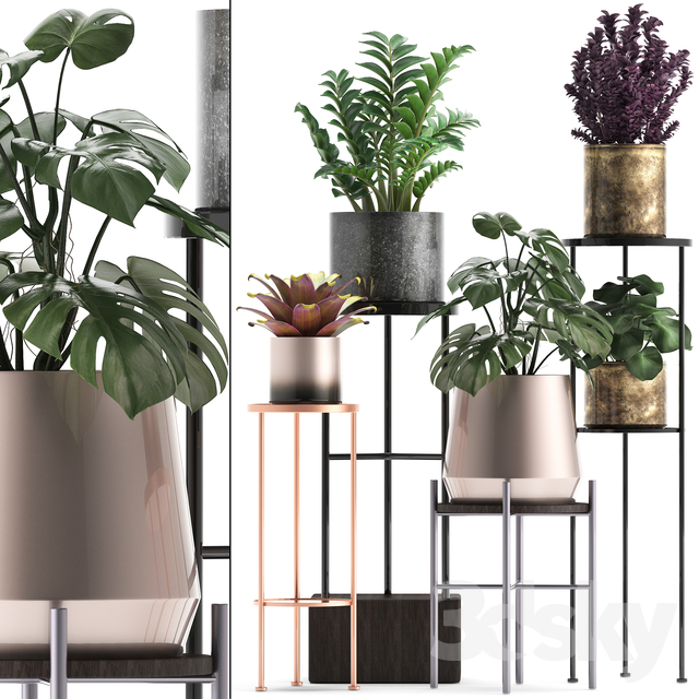 Plant collection 286.