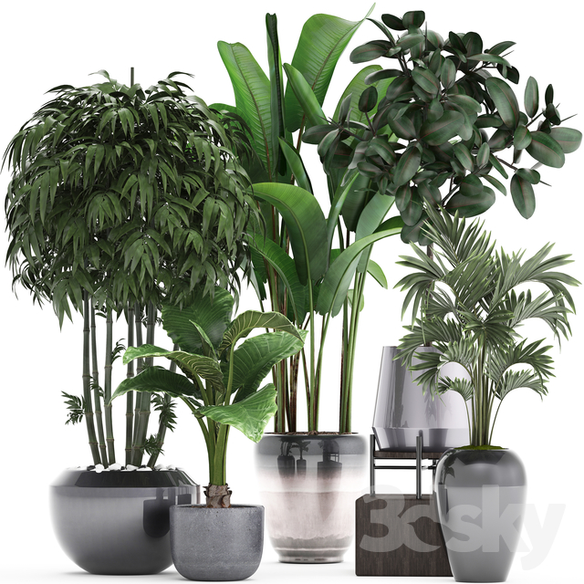 Plant collection 291.