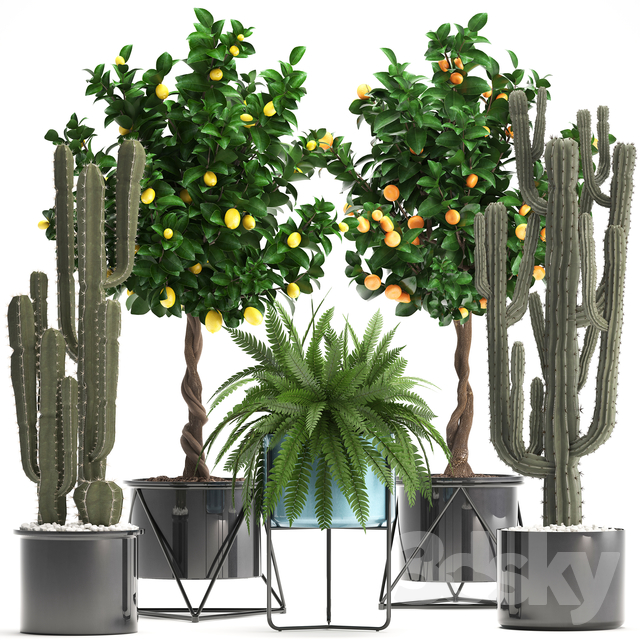 Plant collection 298.