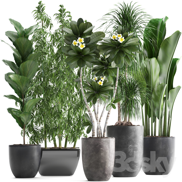 Plant collection 311.