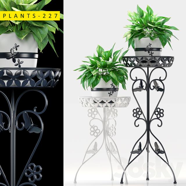 plants 227