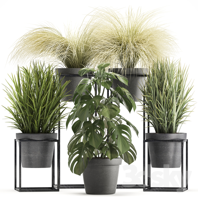 Plant collection 316.