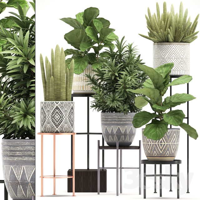 Plant collection 334.