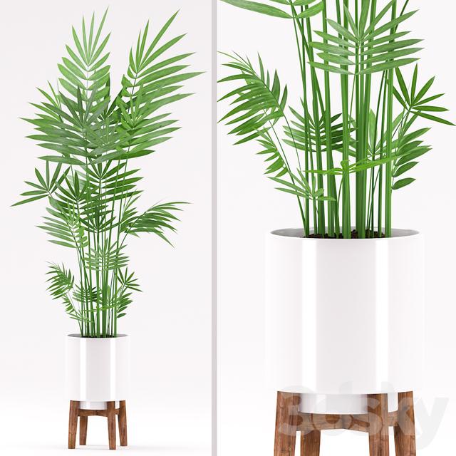 Plants 150