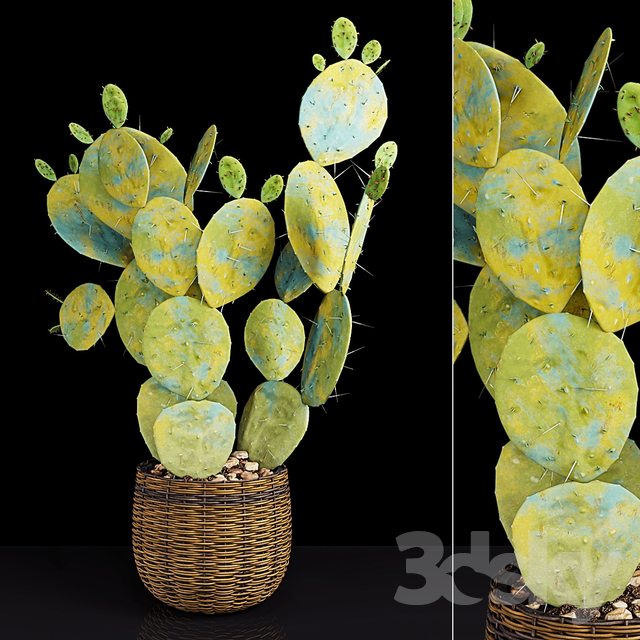 Plant 9.2