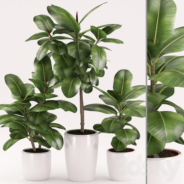 Plants 154