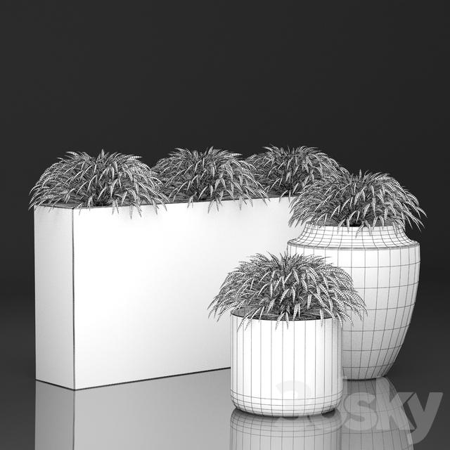 3d models: Outdoor - Grass in pots   Hakonechloa planter