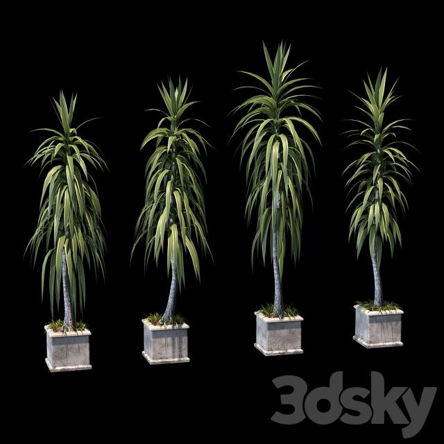 Palm trees in concrete pots. 4 models