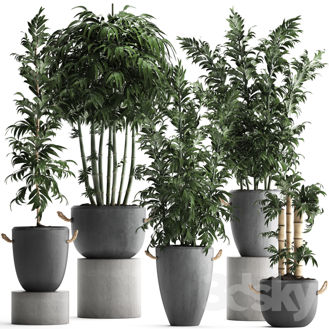 Plant Collection 390.