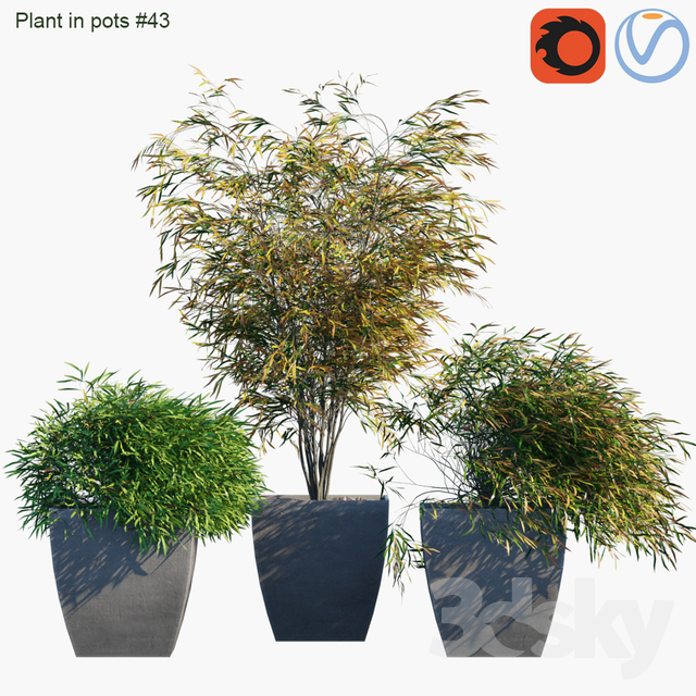 Plant in pots # 43: Palm and grass