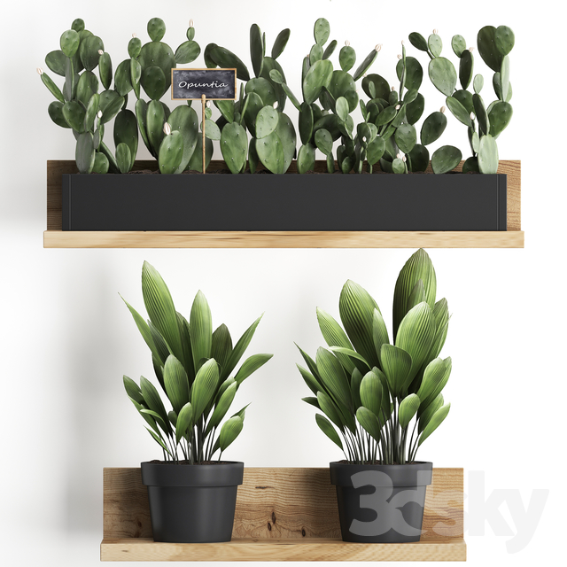 Plant Collection 398.
