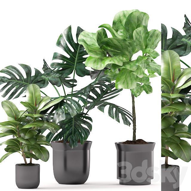 Plants 163