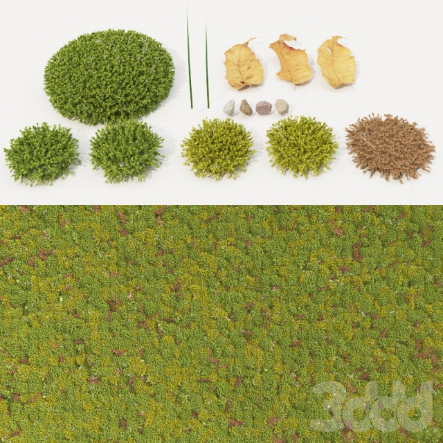 moss_collection
