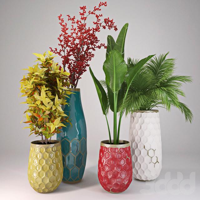 Plants Collection II