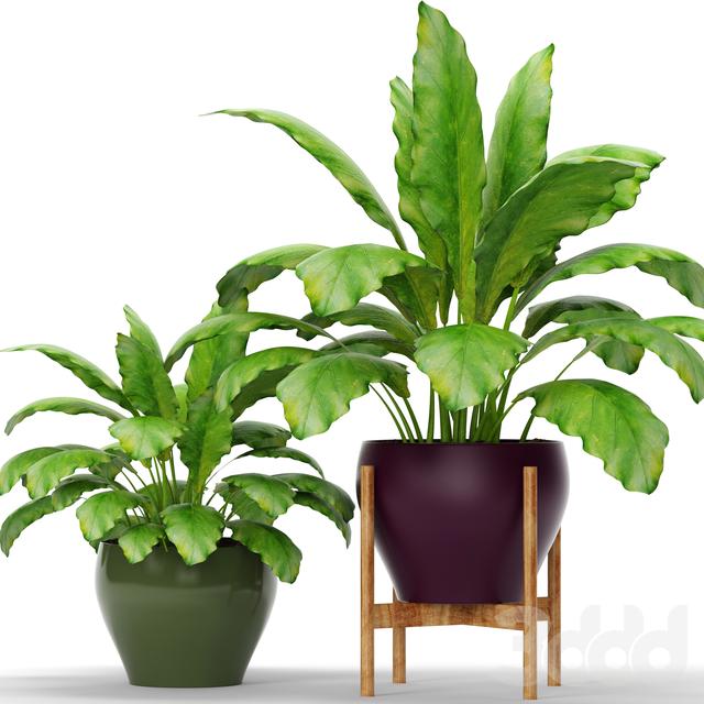 Коллекция растений в горшках 10