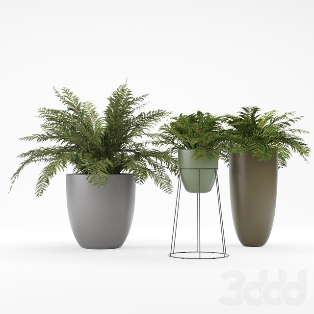 Plant 1 - Ferns
