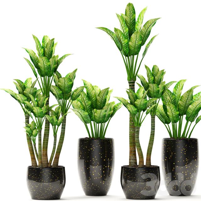 Коллекция растений в горшках 12