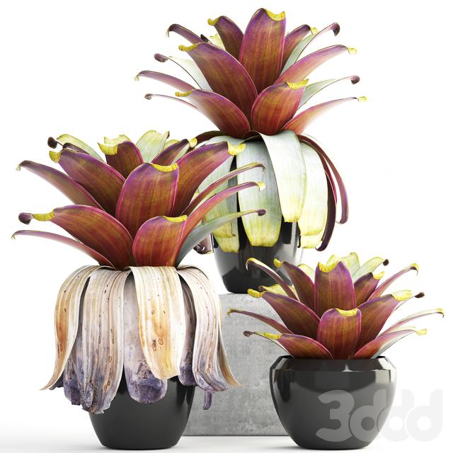 Коллекция растений 149.Tropical plant