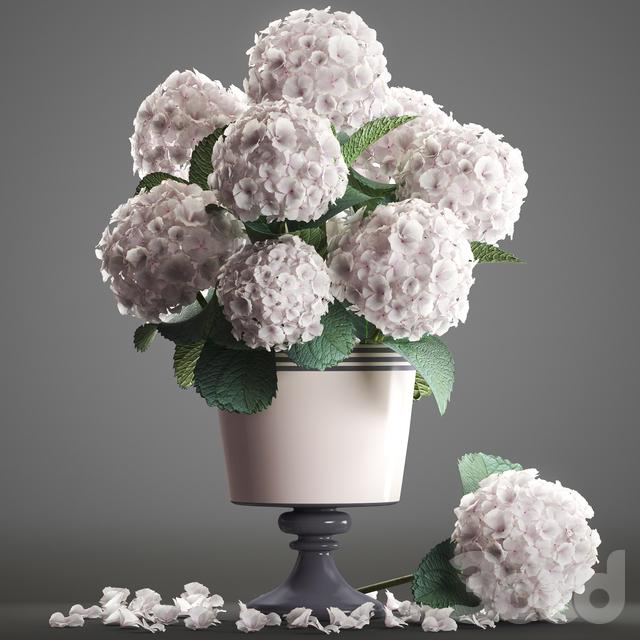 Коллекция цветов 54. Гортензия.