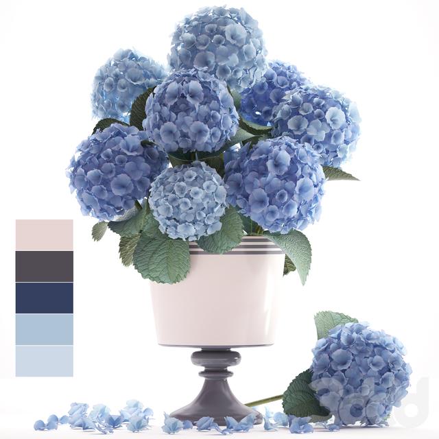 Коллекция цветов 56. Гортензия.