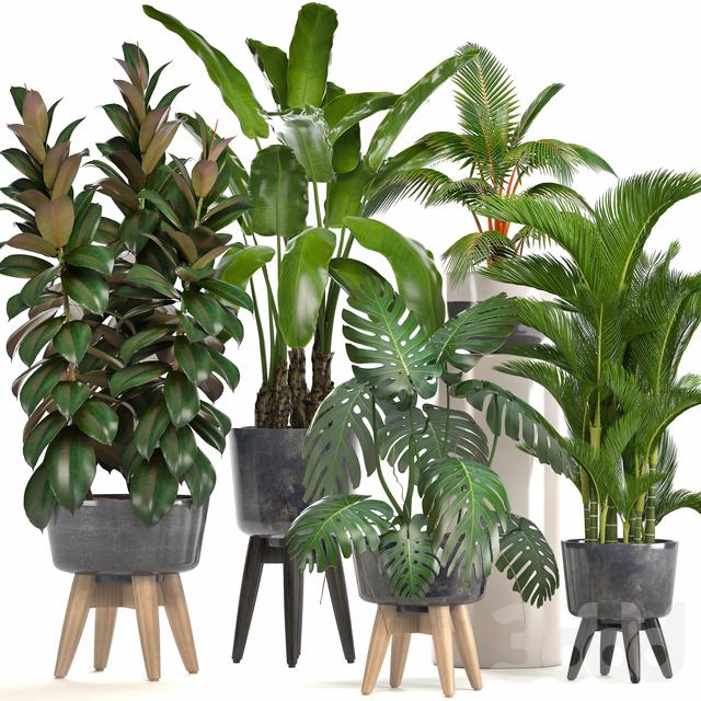 Коллекция растений 228.