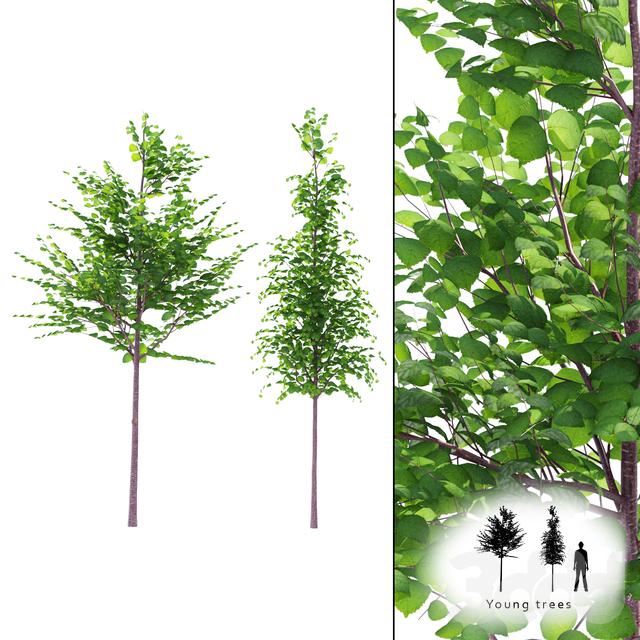 Молодые деревья | Young trees