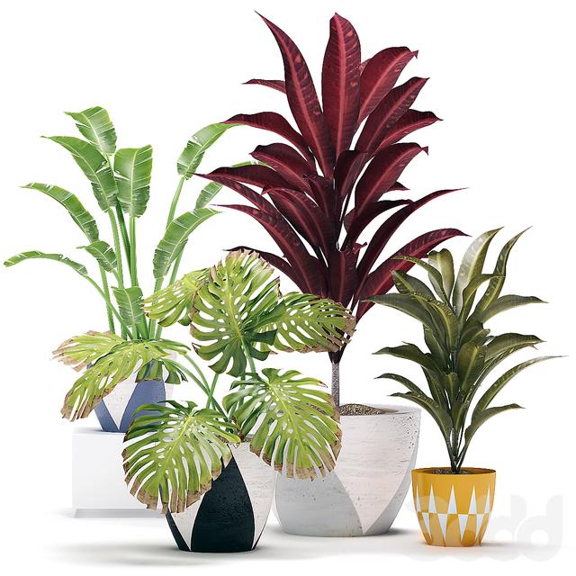 Декоративный набор из растений