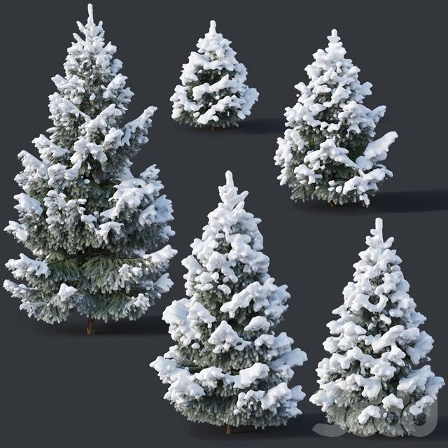 Spruce #2 - Winter Six sizes H1-3m
