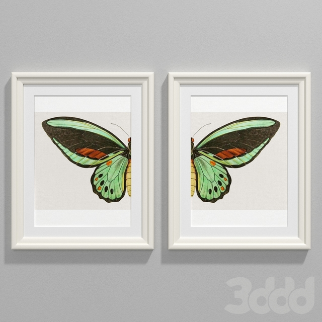 Vintage butterfly chaos wonder