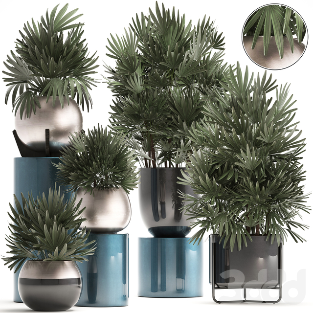 Коллекция растений 299.