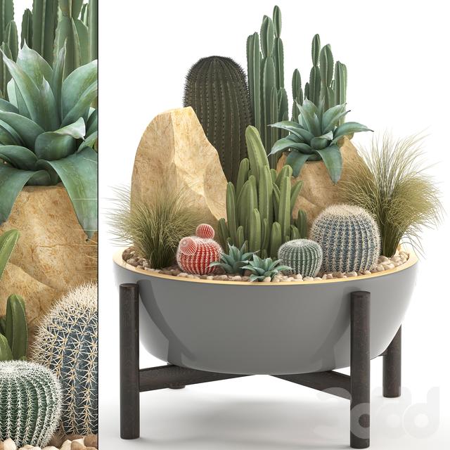 Коллекция растений 306. Cactus set.