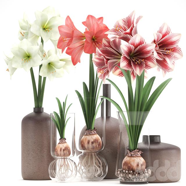 Букет цветов 89. Hippeastrum.